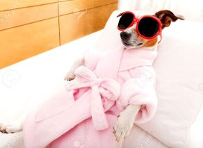 41763457-jack-russell-dog-relaxing-and-lying-in-spa-wellness-center-wearing-a-bathrobe-and-funny-sunglasses